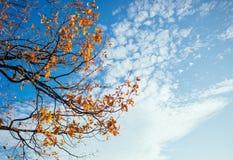 Autumn leaves with cloudy blue sky Stock Photos