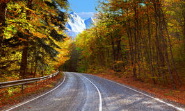 Autumn paved road in the woods Stock Photography