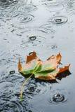 Autumn rain Royalty Free Stock Images