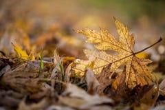 Autumn season leaf Stock Photo