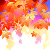 Autumn Vector Watercolor Fall Leaves Stock Photography