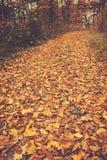 Autumn way Stock Image