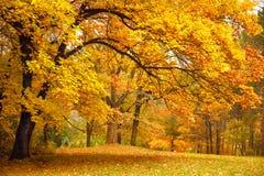 Autunno/alberi dell'oro in una sosta Fotografie Stock