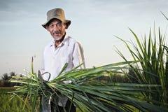 Aziatische landbouwer Stock Afbeeldingen