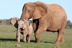 Baby Elephant Chasing Bird Stock Photos