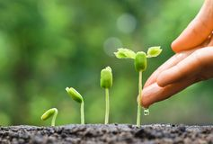 Baby plants seedling Royalty Free Stock Photos