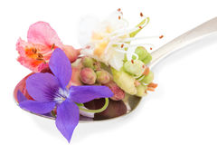 Bach flowers on a spoon Stock Image