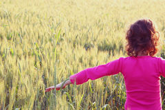 Back side of happy kid looking at the sunset in wheat field , explore and adventure concept Royalty Free Stock Photography