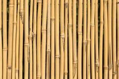 Bamboo cane texture Royalty Free Stock Photo