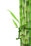 Bamboo frame isolated Royalty Free Stock Photography