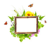 Bamboo frame with summer flowers, green leaves and insect Stock Photos