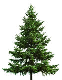 Bare Christmas tree Stock Image