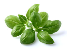Basil leaves Stock Image