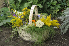 Basket with herbs Royalty Free Stock Image