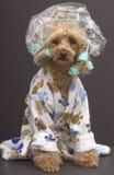 Bathroom Dog Stock Image