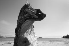Beach at Pacific Rim National Park. Vancouver. Canada Royalty Free Stock Photos