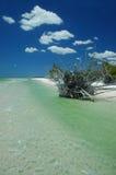 Beach scenic (florida) Stock Image