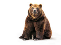 Bear on white Royalty Free Stock Photo