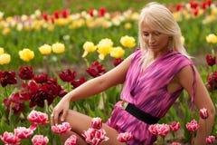 Tulip garden Stock Photography