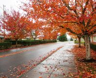 Beautiful fall view Royalty Free Stock Images