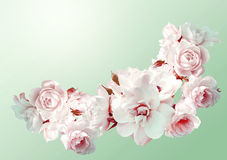 Beautiful  horizontal frame with a bouquet of white roses  with rain drops. Vintage toning image. Stock Photo