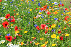Beautiful wild flowers. Stock Photo