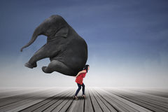 Beautiful woman carrying elephant Royalty Free Stock Images
