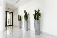 Beauty plants on corridor Stock Photography