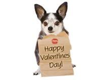 Beijo do cão do dia dos Valentim Fotos de Stock Royalty Free