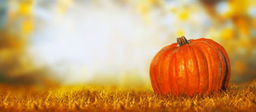 Big pumpkin on lawn over autumn nature background, banner Royalty Free Stock Photos