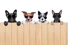 Big row of dogs Stock Photo