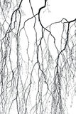 Birch branches Royalty Free Stock Photography