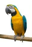 Bird parrot Stock Photography