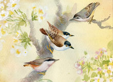 Birds on a blossoming apple tree Stock Image
