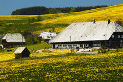 Black forest farmhouse in summer meadow Stock Images