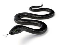 Black Snake III Stock Photos