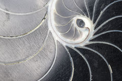 Black Swirl Shell Texture Stock Photos