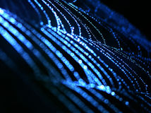Blaues Spinnenweb Stockfoto