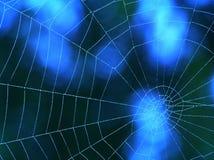 Blaues Spinnenweb Lizenzfreie Stockbilder