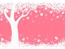 Blossom  cherry Stock Image