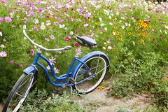 Blue Bicycle Flowers Garden Royalty Free Stock Photography