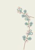 Blue sakura flowers Stock Photography