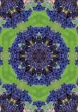 Blue winegrapes mandala Royalty Free Stock Photography