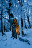 Blue winter forest with single tree with mysterious glow inside Stock Photography