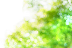 Blur tree background Royalty Free Stock Photos