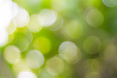 Blur of the tree Royalty Free Stock Photos