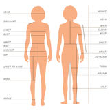 Body measurements size chart, Royalty Free Stock Photos