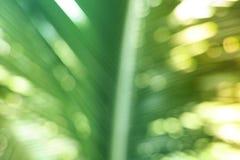 Bokeh,棕榈树 图库摄影