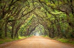 Botany Bay Spooky Dirt Road Creepy Oak Trees Royalty Free Stock Photography