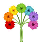 Bouquet of colorful gerbera flowers. Stock Photography